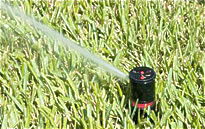 Rotary Sprinkler Head